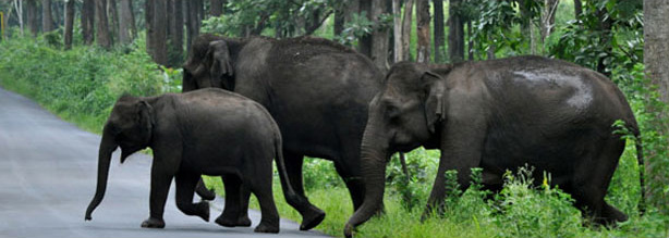 Wayanad Tours by Ripples Holidays