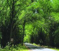 Mysore to Wayanad Cheap Tour Package 2 Nights- 3Days