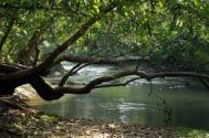 Kalpetta to Wayanad Tour Package 1 Night -2 Days