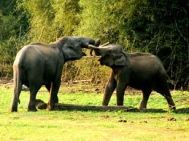 Bangalore to Wayanad Honeymoon Tour Package 2 Nights-3 Days