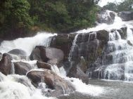 Kozhikode (Calicut) Wayanad Waterfall Tour Package 2 Nights-3 Days